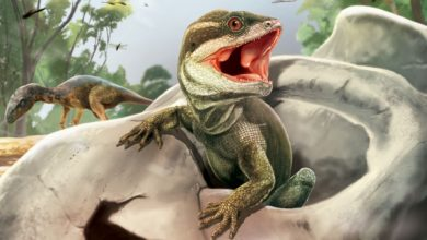 A skull belonging to the ancestor of all reptiles discovered in Argentina