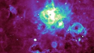 Astronomers have discovered thousands of previously unknown sources of radio signals