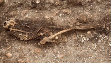 Remains of an Iron Age warrior discovered in Sweden