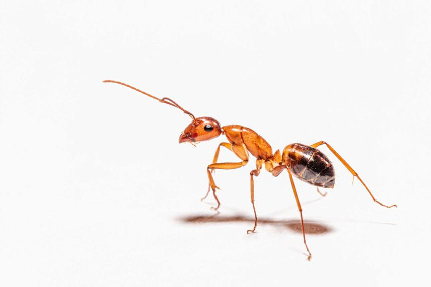 Revealed useful tricks of ants in the construction of houses