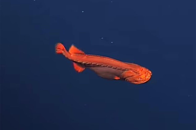 Shape shifting fish spotted off California coast