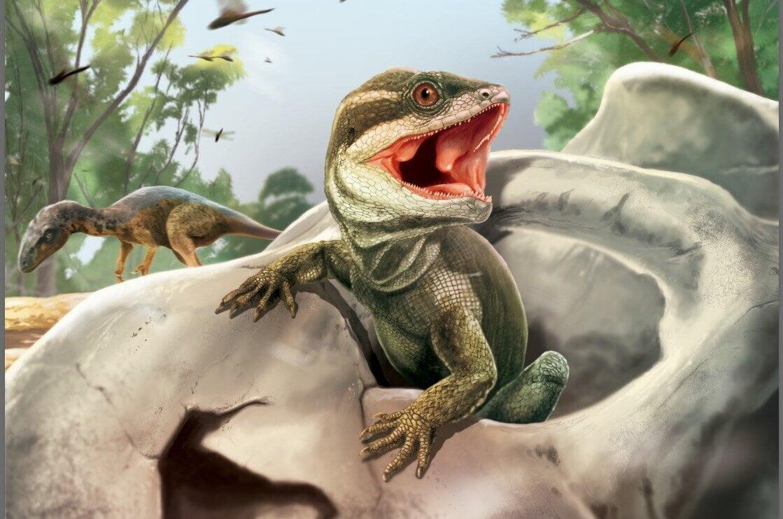 The most primitive lizard