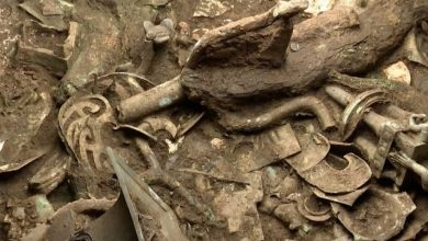 A sacred tree made of bronze discovered in China