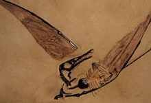Lived 120 million years ago archaeologists have found the ancestor of modern birds