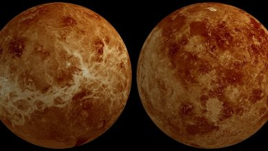 Newly formed volcanic region discovered on Venus