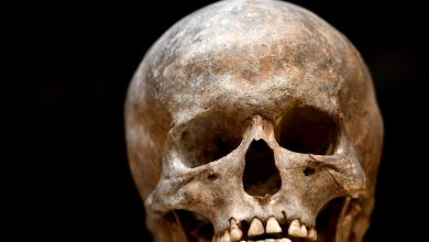 Scientists beat bearded skull and receive the Shnobel Peace Prize